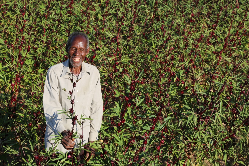 Project funding for agriculture in Africa
